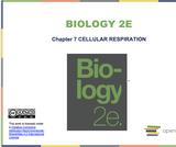 Biology I Course Content, Cellular Respiration, Cellular Respiration Resources